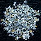 Zebra Nerite Seashells - Craft Shells / Shellcraft - FREE ship!