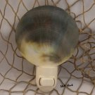 Polished Black Lip Oyster Seashell Night Light - Tropical / Beach / Coastal - FREE ship!