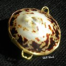Polished Natural Limpet Seashell Pill Box - Tropical / Beach Sea Shell - FREE ship!