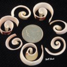 24 Polished Swirl-Cut Strawberry Strombus - Craft Shells / Shellcraft - FREE ship!