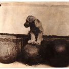 Real Photo of Piney the Schnauzer Pup perched on the famous medicine ball, 1929