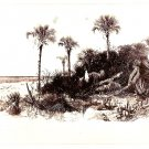 Real Photo of beach with palm trees & vegetation on the coast of Florida, 1871