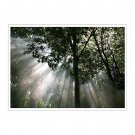 IKEA Premiar CRESCENDO OF LIGHT Trees Forest Canopy CANVAS and FRAME WALL ART Print HUGE Mandala