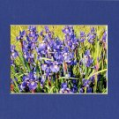 Floral BLUE IRISES Enhanced Digital Photo Matted Print, Renee Rutana