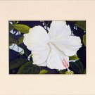 Hawaii HIBISCUS Flower Spring, White, Lemon Yellow & Greens