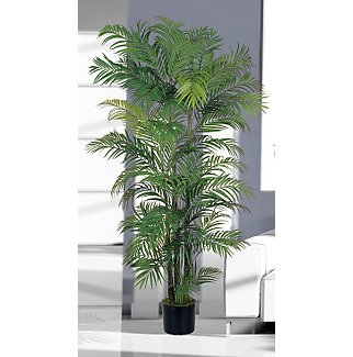 Areca Silk Palm Tree 6 ft
