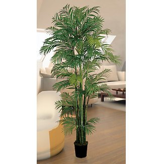 Areca Silk Palm Tree 7 ft
