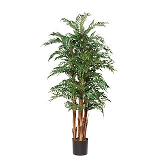 Parlor Palm Silk Tree 5 ft