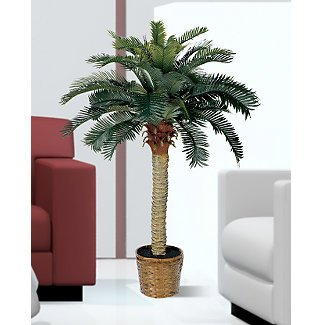 Sago Silk Palm Tree 4 ft