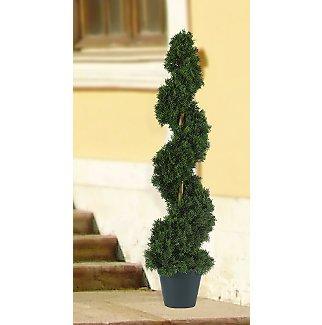 Cedar Sprial Tree 3 ft