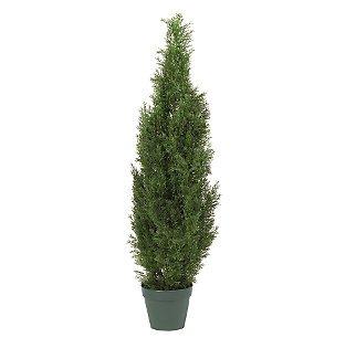 Min Cedar Pine Silk Tree