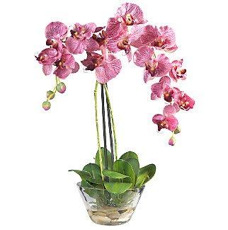 Phalaenopsis w/Glass Vase