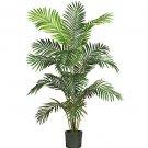 Paradise Palm Silk Tree 6'