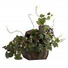Grape Leaf Silk Plant