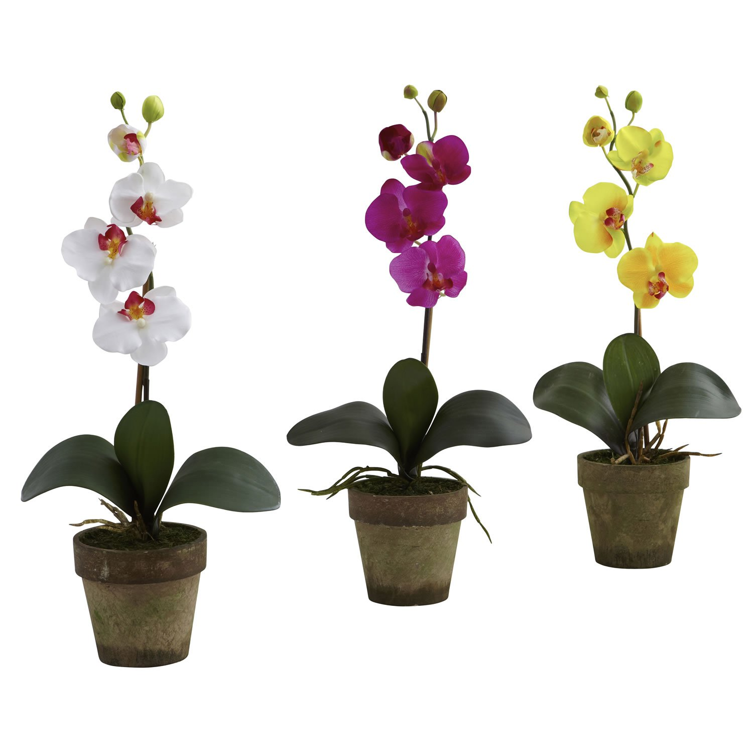 Potted Phalaenopsis Orchid Arrangement Set