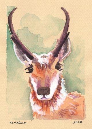 """Wyoming Pronghorn Antelope"" Watercolor Painting Print"