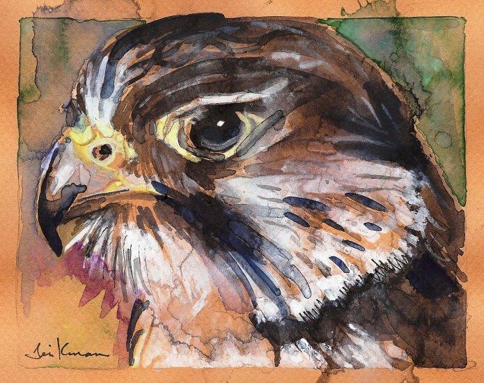 """Peregrine Falcon"" Watercolor Painting Print"