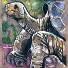 """Galapagos Tortoise"" Watercolor Painting Print"