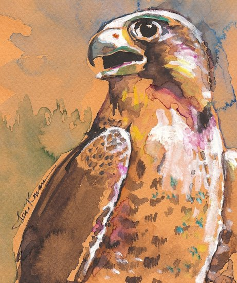 """Peregrine Falcon 2"" Watercolor Painting Print"