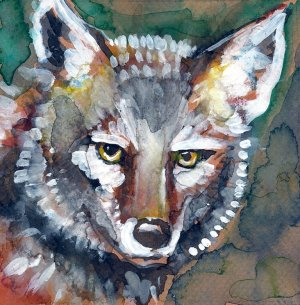 """Mister Coyote"" Watercolor Painting Print"