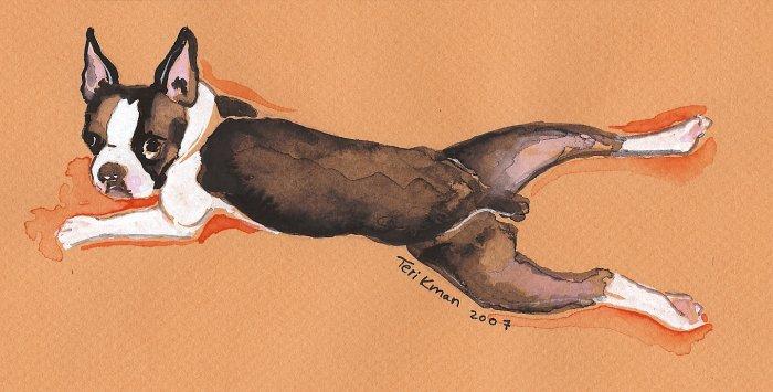"""Boston Terrier"" Watercolor Painting Print"