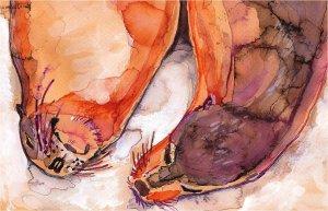 """""""Galapagos Sea Lions"""" Watercolor Painting Print"""