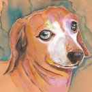 "Dachshund ""Baron"" Watercolor Painting Print"
