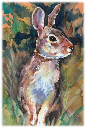 """Cottontail Rabbit"" Watercolor Painting Print"