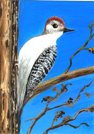 Woodpecker / ACEO Original Acrylic Painting by R.J.