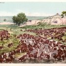 A Round Up, Cowboy Themed Detroit Photographic Company Vintage Postcard - 3634