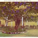 Giant Grape Vine, San Gabriel Mission California CA Vintage Postcard - 3783
