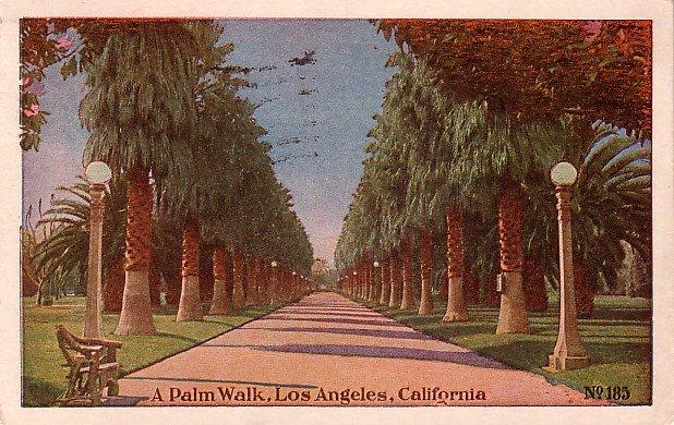 A Palm Walk, Los Angeles California CA Vintage Postcard - 3901