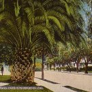 St. James Park in Los Angeles California CA Vintage Postcard - 0040