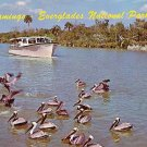 Peligans in Everglades National Park Florida FL Chrome Postcard - 0068