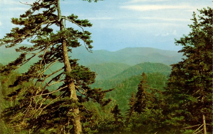Clingmans Dome Road in Great Smoky Mountains National Park Postcard - 0124