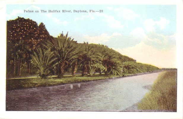 Palms on The Halifax River in Daytona Florida FL Vintage Postcard - 0292