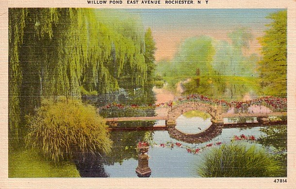 Willow Pond at East Avenue in Rochester New York NY Linen Postcard - 0319