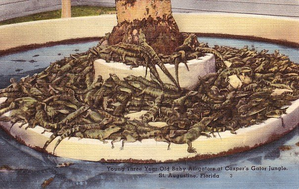Casper's Gator Jungle in St. Augustine Florida FL Linen Postcard - 0913