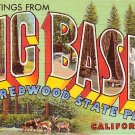 Greetings from Big Basin Park in California CA 1950 Curt Teich Large Letter Postcard - 1232