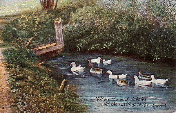 Where the Duck Dabbles, Raphael Tuck & Sons Vintage Postcard - 1734