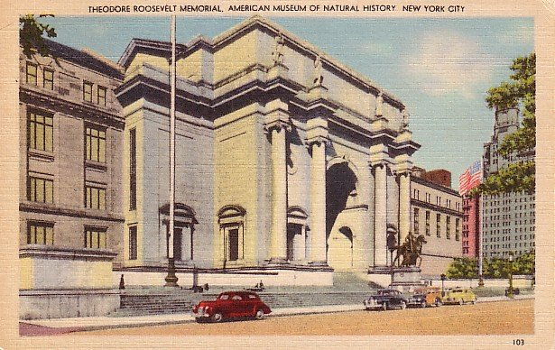 Theodore Roosevelt Memorial Museum of Natural History in New York City NY, Linen Postcard - 1752