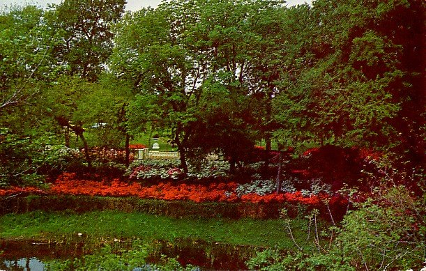 Azalea Garden in Dallas Texas TX 1960 Chrome Postcard - 2349