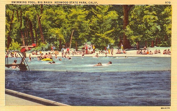 Swimming Pool in Big Basin Redwood State Park, California 1948 Postcard - 2503