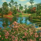 Beautiful View of Cypress Gardens in Florida FL, 1956 Chrome Postcard - 2677