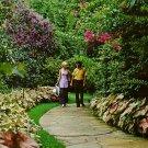 Sunken Gardens in St. Petersburg Florida FL, 1971 Curt Teich Chrome Postcard - 2692