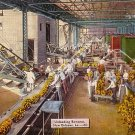 Unloading Bananas in New Orleans Louisiana LA, 1946 Linen Postcard - 2765