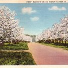 Cherry Blossoms at Benton Harbor in St. Joseph Michigan MI, 1935 Curt Teich Postcard - 2846