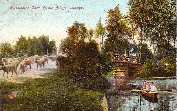 Sheep at Washington Park in Chicago Illinois IL, Vintage Postcard - 2979