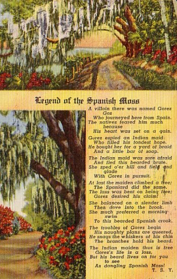 Legend of the Spanish Moss, 1950 Curt Teich Linen Postcard - 3036