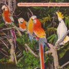 Macaws and Cockatoo at Parrot Jungle in Miami Florida FL, Linen Postcard - 3138